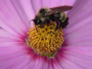 bee feeding at a flower